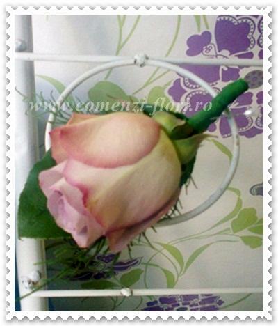 Cocarde nunti din trandafiri.0994